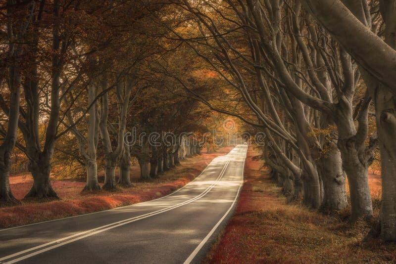 Härlig overklig suppleant färgat skoglandskap arkivbilder