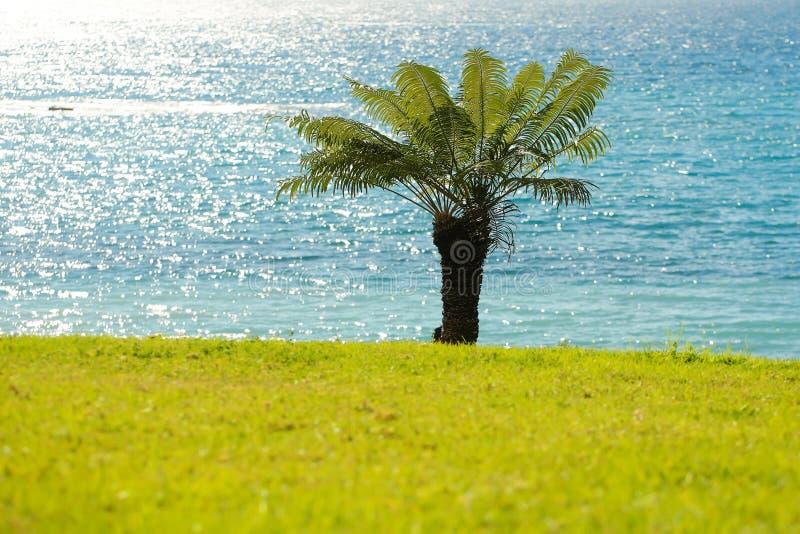 Härlig palmträd royaltyfria bilder