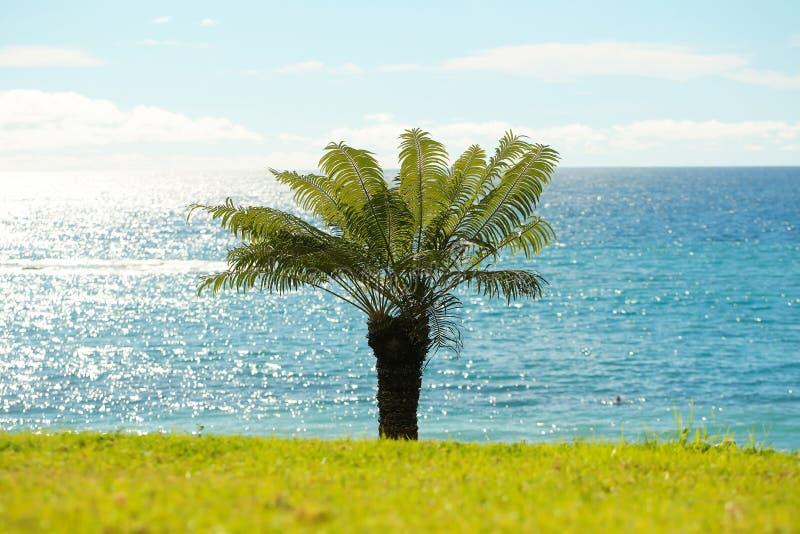 Härlig palmträd arkivfoton