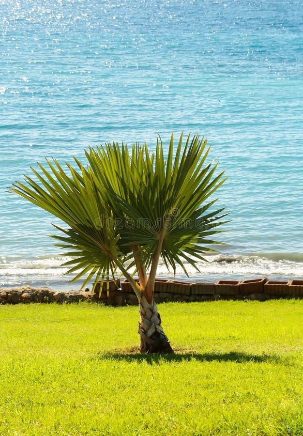 Härlig palmträd royaltyfri bild