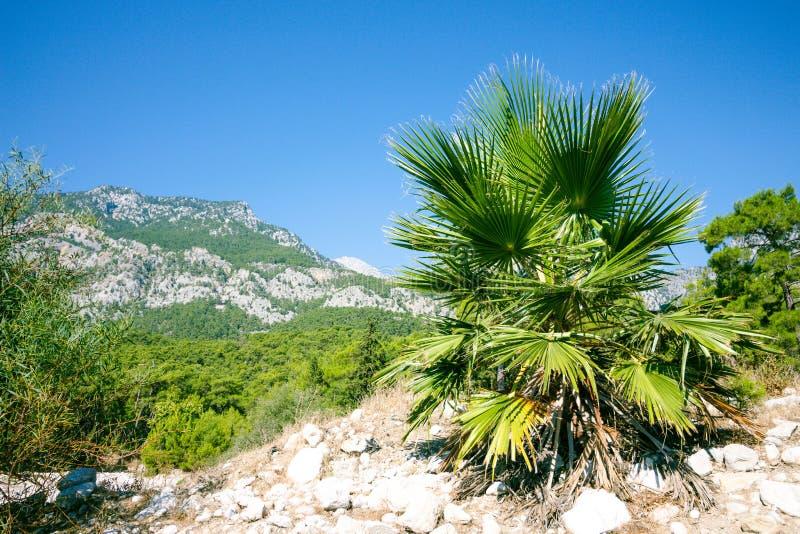 Härlig palmträd med stora sidor royaltyfri bild