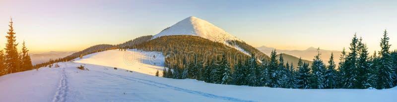 härlig panoramavinter Landskapet med prydligt sörjer träd, blå himmel med solljus och höga Carpathian berg på bakgrund arkivbilder
