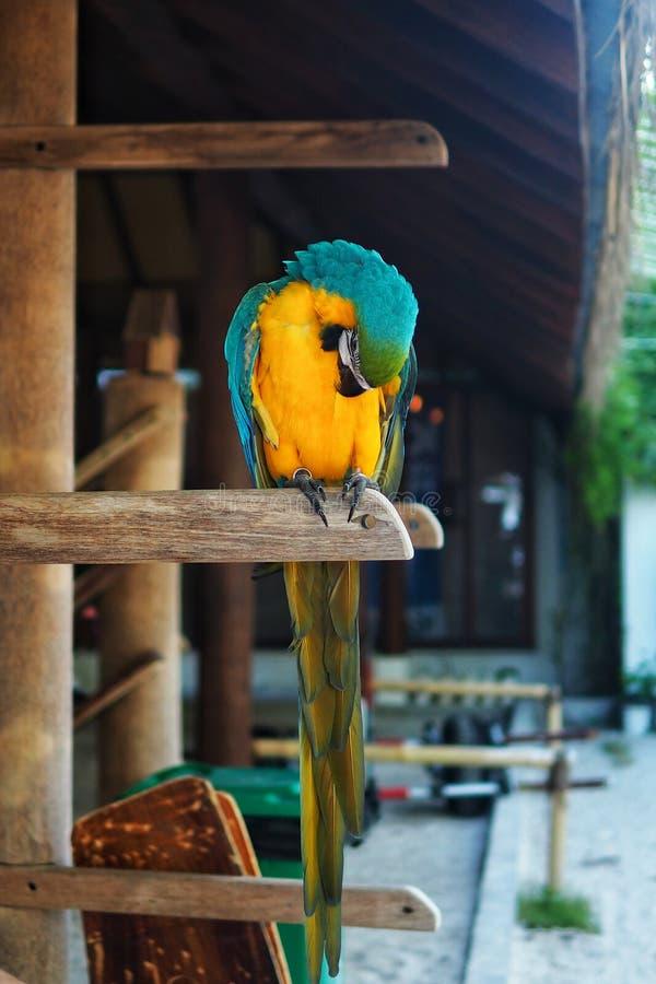 härlig papegoja royaltyfri foto