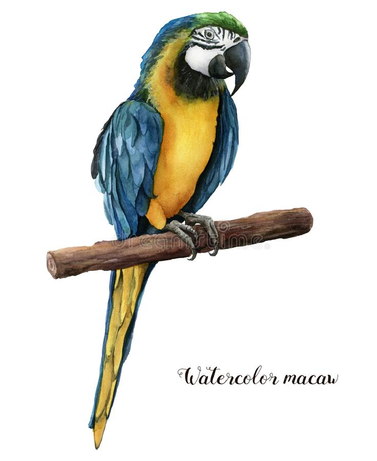 Härlig papegoja för vattenfärg Räcka den målade blått-och-guling papegojan som isoleras på vit bakgrund Naturillustration med vektor illustrationer