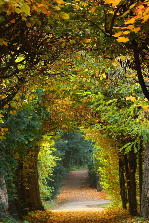 härlig park royaltyfria bilder