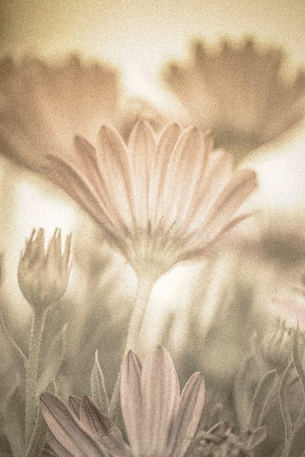 Pastellfärgad blom- bakgrund royaltyfri fotografi