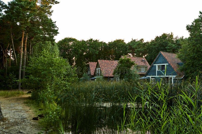Härlig plats av hus vid sjön som omges av skogar på solnedgångtid Nederländerna Juli royaltyfri foto