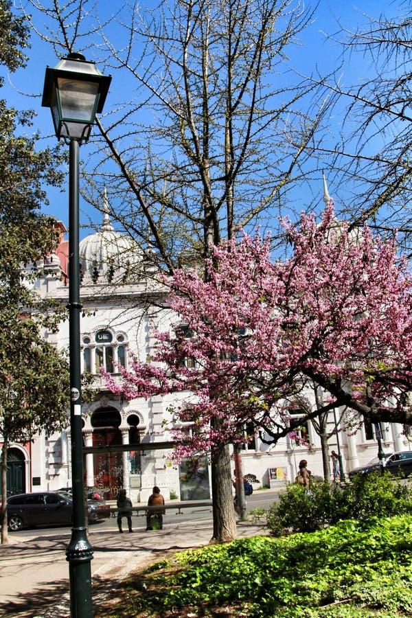 Härlig Principe verklig trädgård i Lissabon arkivbilder