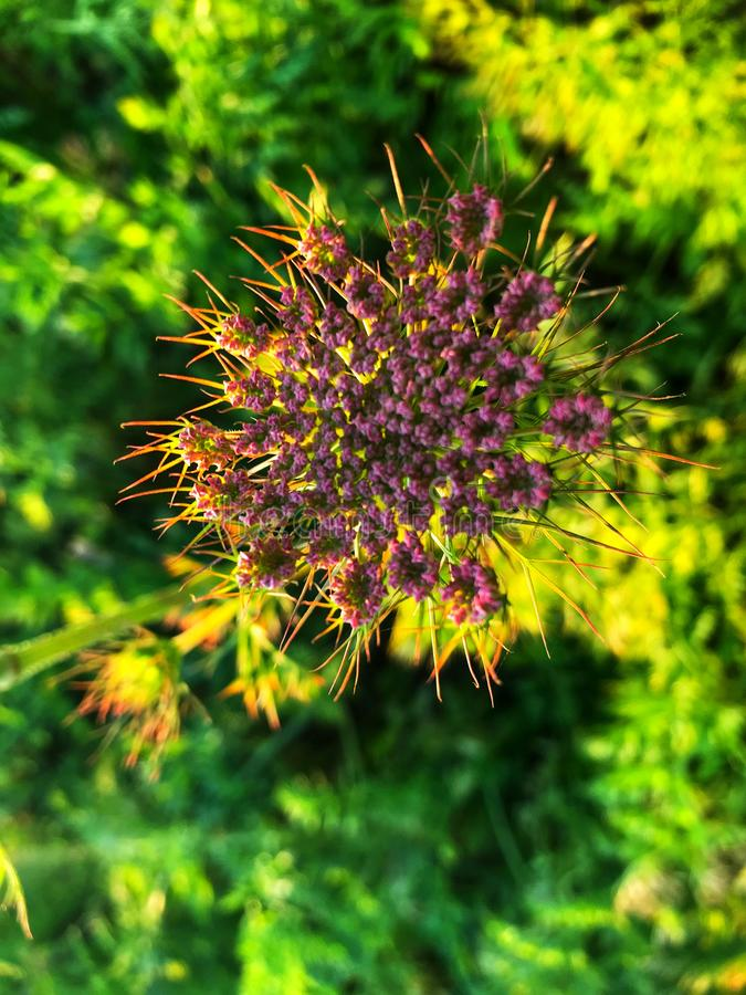 Härlig purpurfärgad blomma i by royaltyfri bild