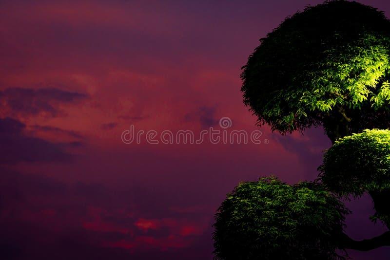 H?rlig purpurf?rgad himmel och m?rka moln med den klippte busken i aftonen Gr?nt tr?d och purpurf?rgad himmelbakgrund royaltyfri foto