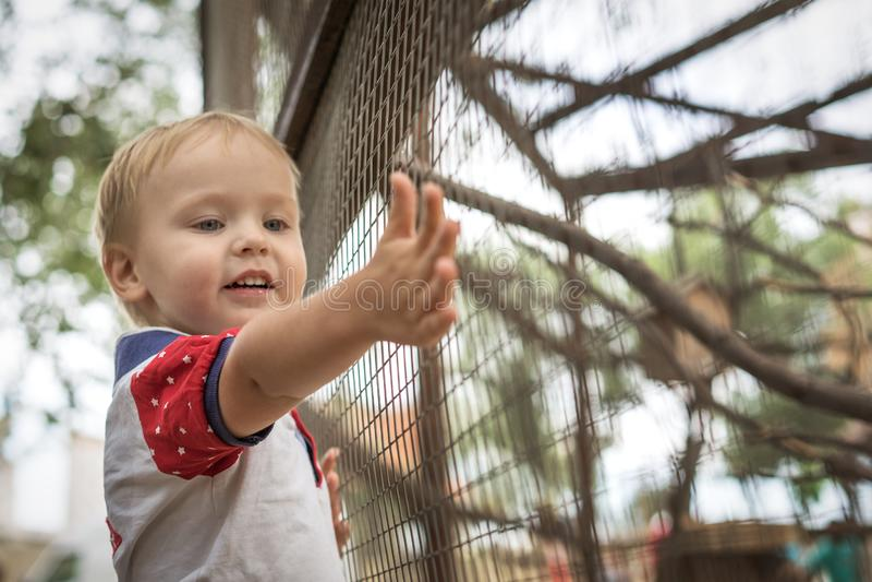 Härlig pys som ler anseende på staketet med djur i zoo som framlänges sträcker handen royaltyfri bild