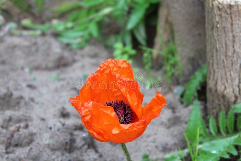 Härlig röd blomma royaltyfri fotografi