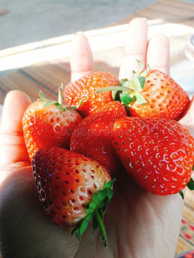 Härlig röd frukt royaltyfri fotografi