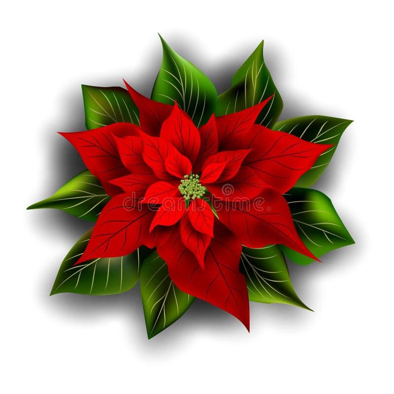 Härlig röd pointsettia julen dekorerar nya home idéer för garnering till royaltyfri illustrationer