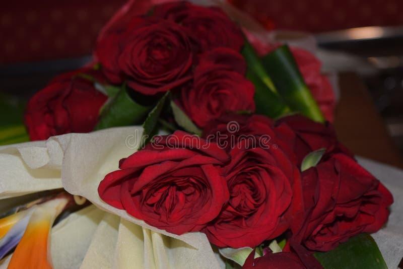 Härlig röd ros med den selektiva fokusen royaltyfria foton
