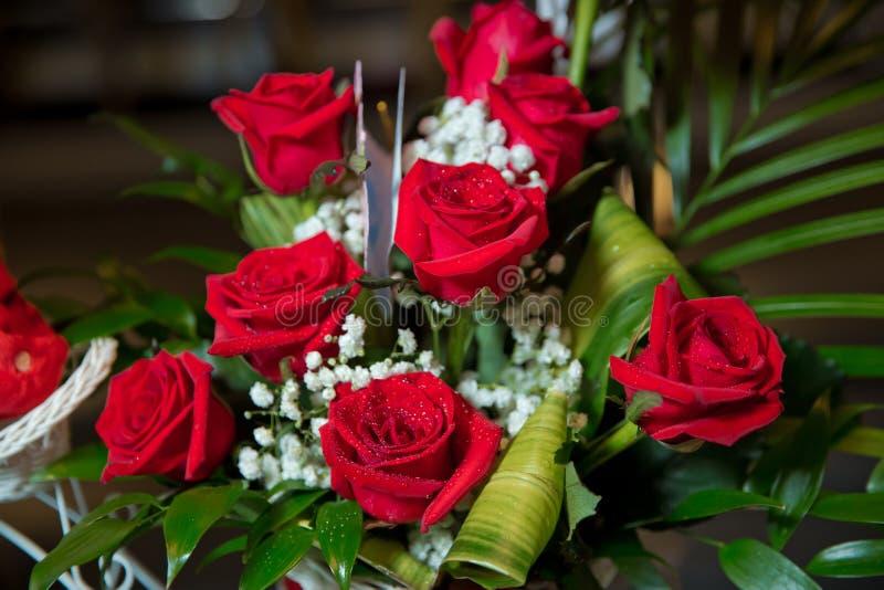 Härlig röd rosa blomma för valentindag rött rose vatten för liten droppe Droppar av vatten på rosen Mitt av en röd ros arkivfoton
