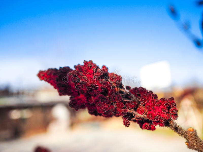 Härlig röd växt royaltyfri foto