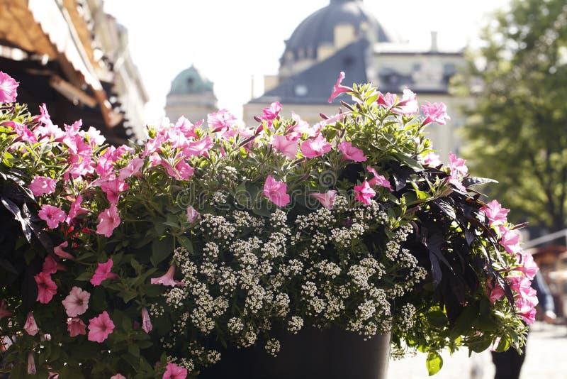 Härlig rabatt av blommor på en stadsgata royaltyfri foto