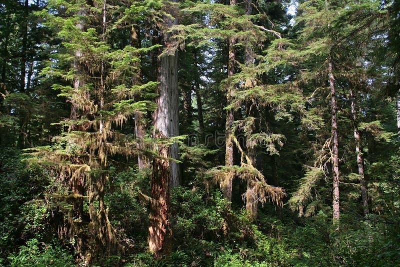 Härlig rainforest i British Columbia, Kanada arkivfoto