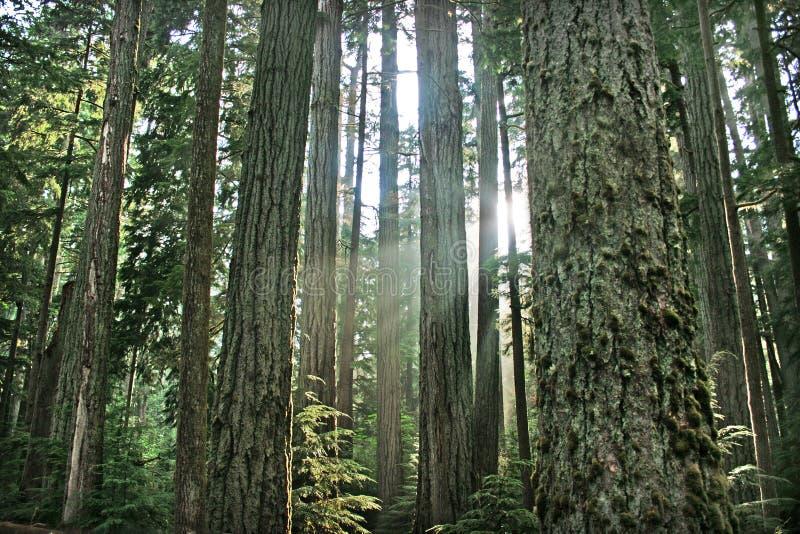 Härlig rainforest i British Columbia, Kanada arkivbilder