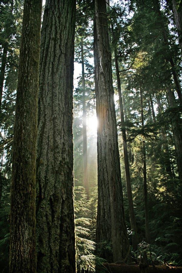 Härlig rainforest i British Columbia, Kanada royaltyfri fotografi