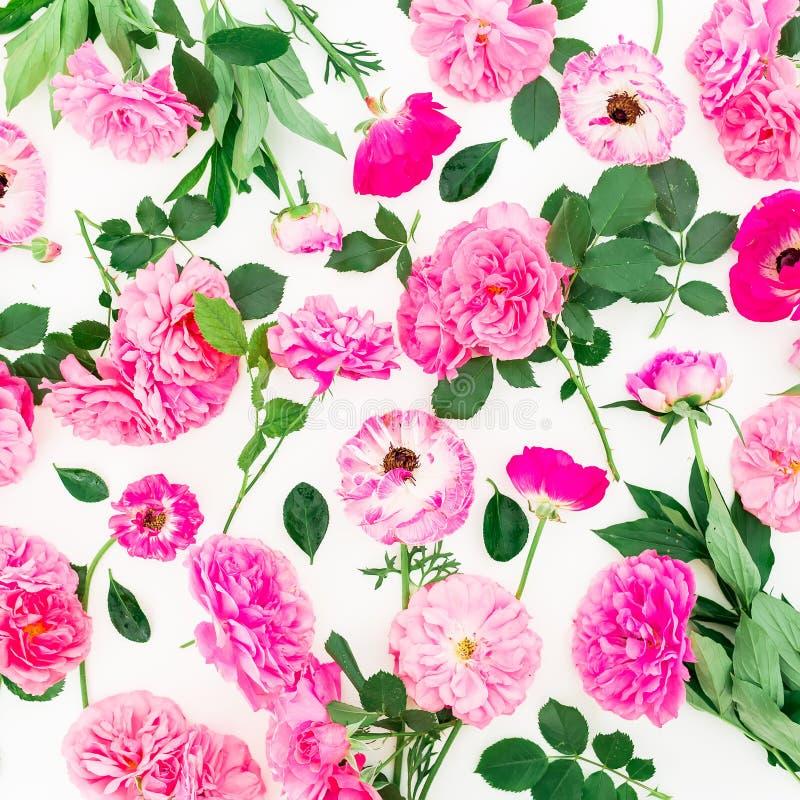 Härlig ranunculusblomma, rosblomma och blad på vit bakgrund Lekmanna- lägenhet, bästa sikt Blom- livsstilsammansättning royaltyfri bild