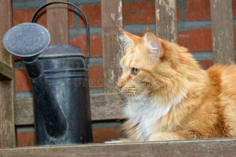 härlig red för kattträdgård utomhus royaltyfri bild
