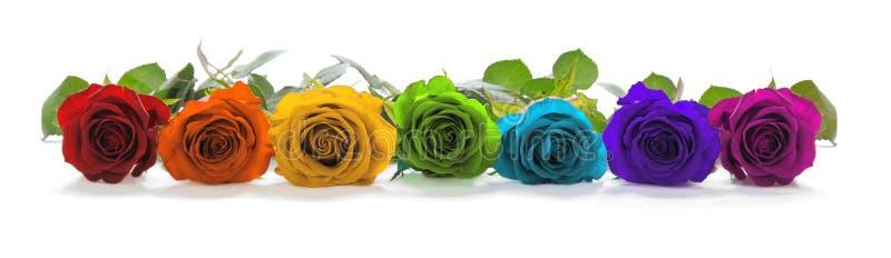 Härlig regnbåge färgad rad av rosor royaltyfri fotografi