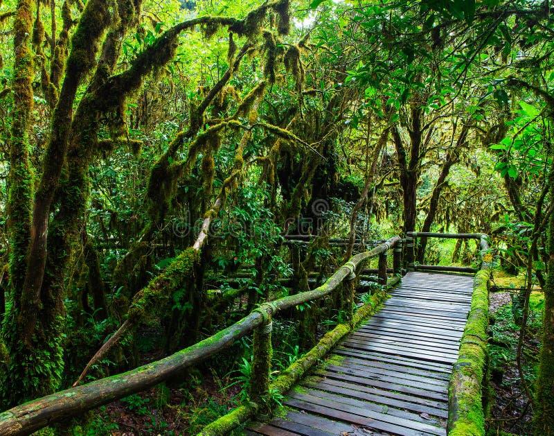 Härlig regnskog på slingan för ang-kanatur arkivfoto
