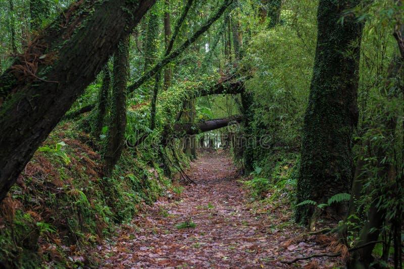 Härlig romantisk gammal aveny av träd arkivfoton