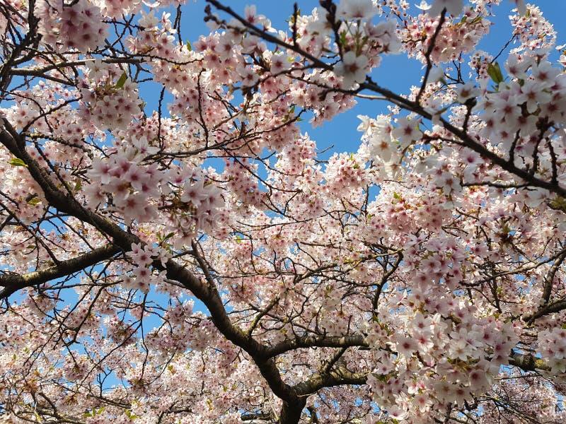 Härlig rosa blommabakgrund arkivbild