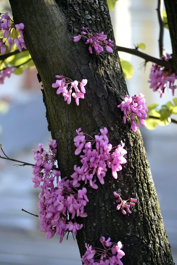 Härlig rosa färgblomma på träd royaltyfri fotografi