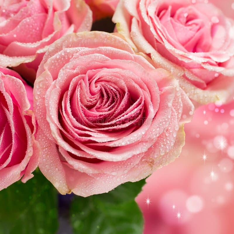 Härlig rosa färgrosnärbild arkivfoto