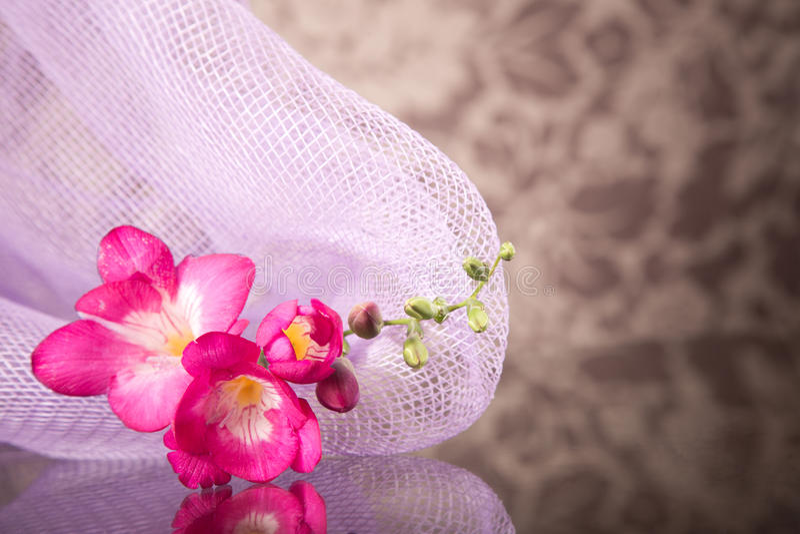 Härlig rosa freesia arkivbild