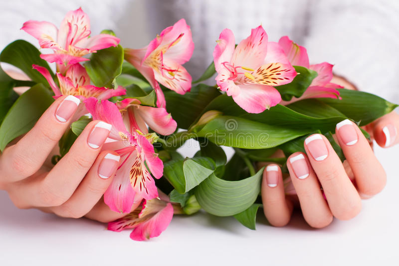 Härlig rosa freesia i kvinnas händer arkivfoton
