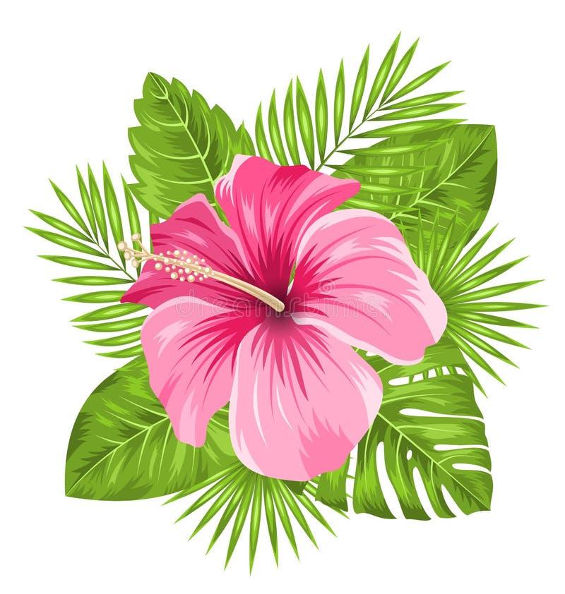 Härlig rosa hibiskusblommablomning och tropiska sidor vektor illustrationer