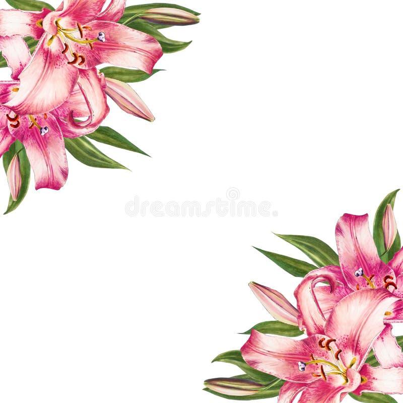 Härlig rosa liljahörnram Bukett av blommor Blom- tryck Mark?rteckning vektor illustrationer