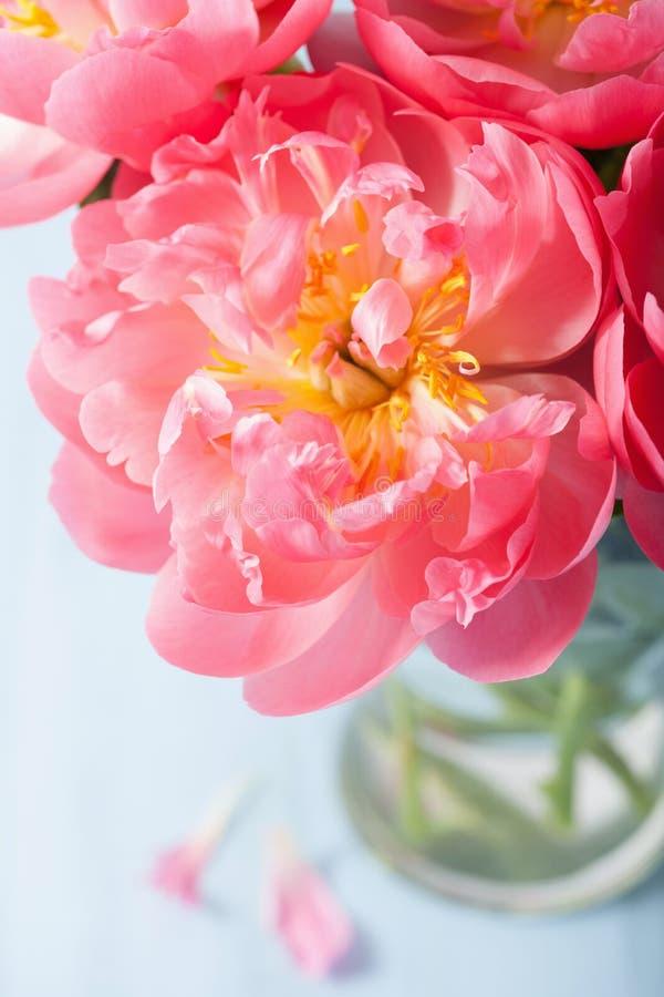 Härlig rosa pionblommabukett i vas arkivbild