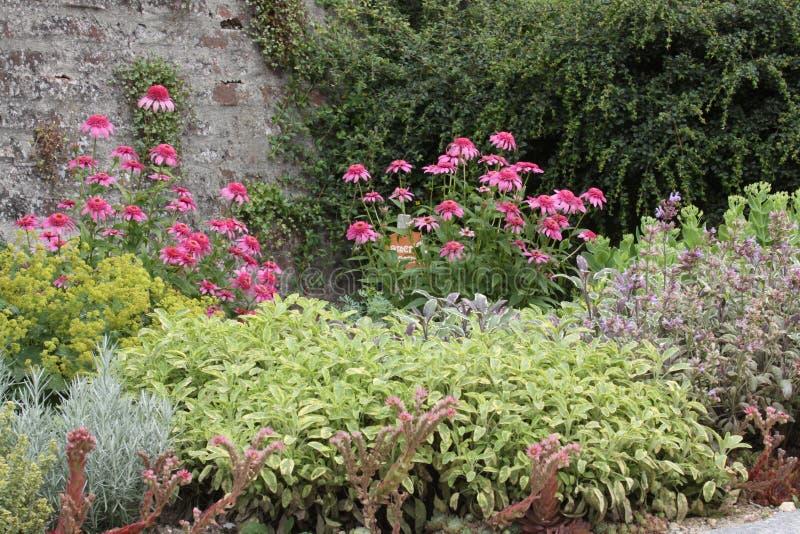 Härlig säng för örtträdgård royaltyfri foto