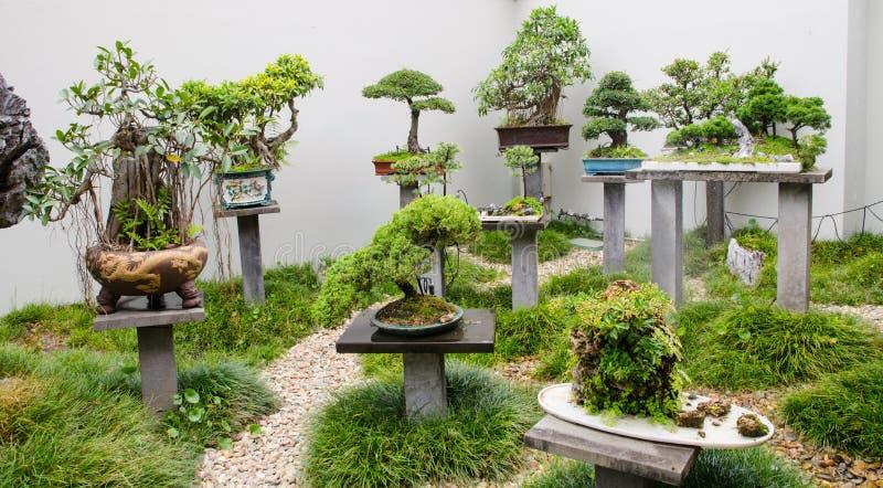 Härlig samling av bonsaiträd med krukor i en trädgård royaltyfria bilder
