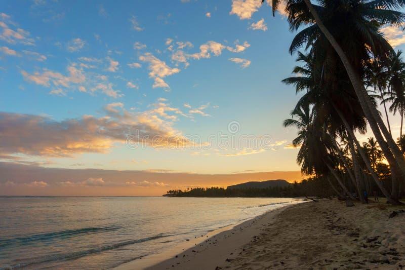 Härlig sandig strand med palmträd på gryning arkivbild