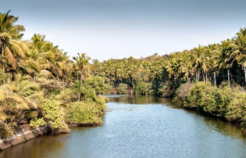 Härlig scenisk sikt av avkrokar av Kerala, från bron över royaltyfri fotografi