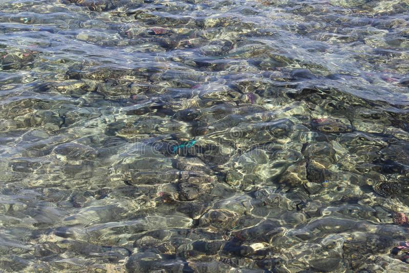 härlig seabed för bakgrund arkivfoto