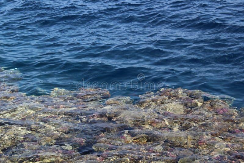 härlig seabed för bakgrund royaltyfria bilder