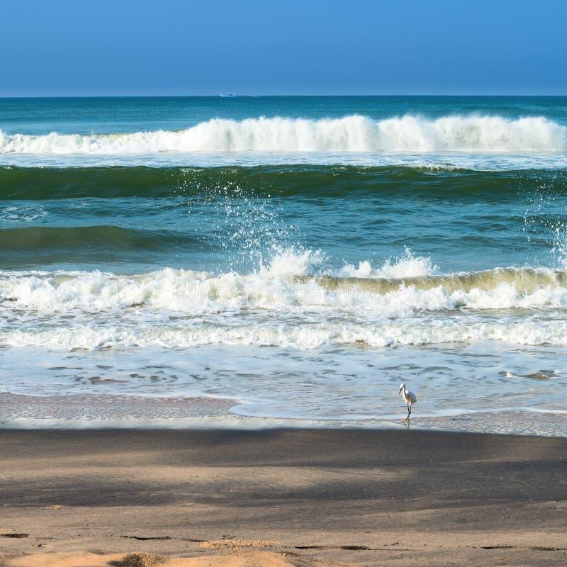Härlig seascape med skummande vågor, vit fågel arkivbilder