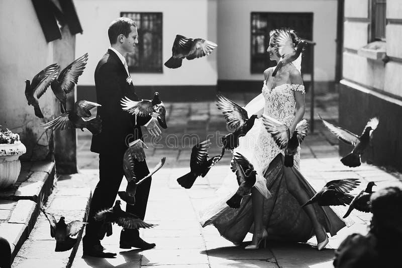 Härlig sexuell brud för saga som går till stiliga brudgumfåglar royaltyfria bilder