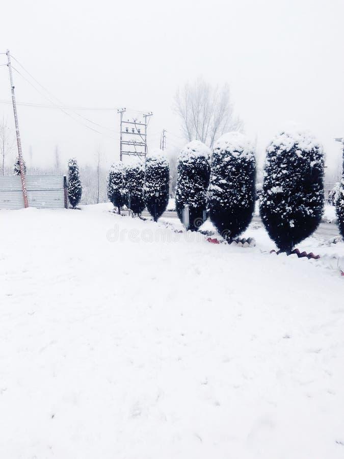Härlig sikt av att snöa royaltyfri fotografi