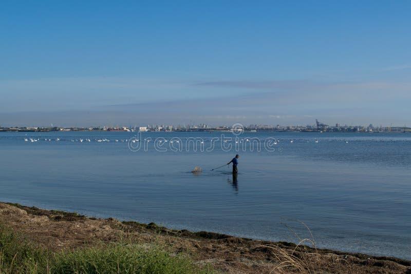 Härlig sikt av Blacket Sea en fiskare och svanar som söker för mat arkivbilder