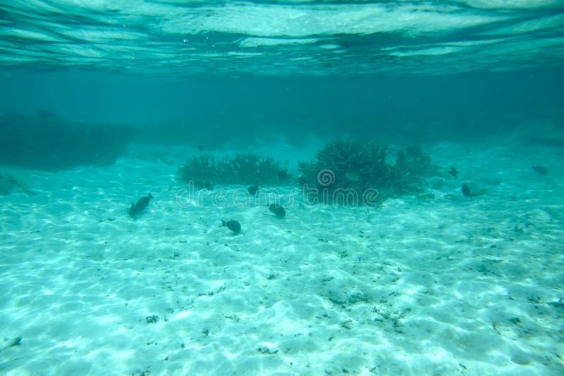 Härlig sikt av döda korallrever Turkosvatten- och vitsandbakgrund Indiskt hav royaltyfria bilder