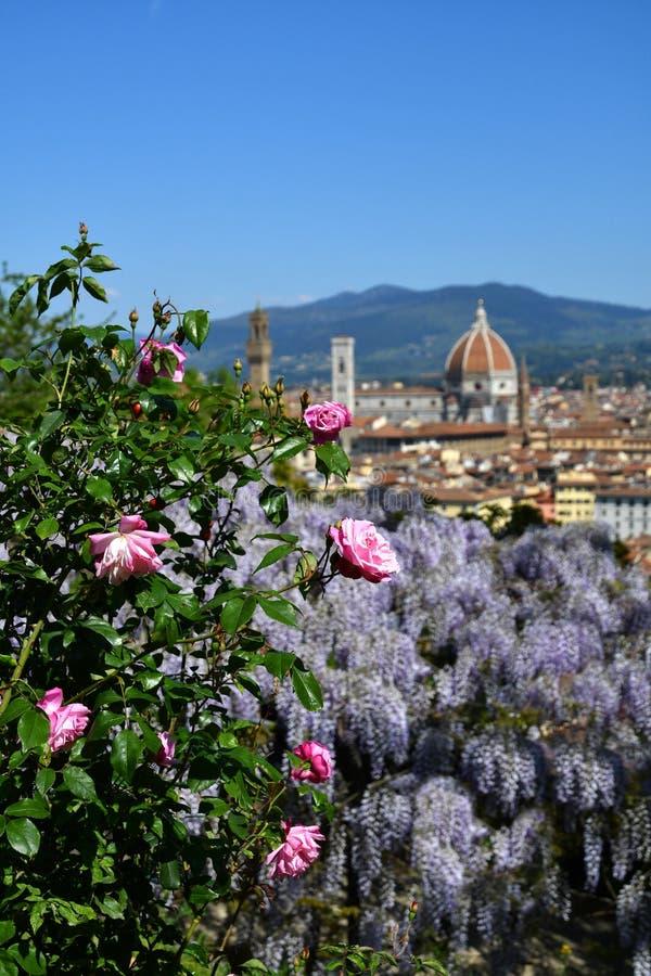 H?rlig sikt av den ber?mda domkyrkan Santa Maria del Fiore i Florence med purpurf?rgad blommande wisteria och rosa rosor arkivfoton